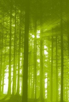 Bos Infolijn